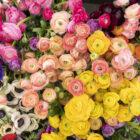 Bezpłatny kurs florystyczny z egzaminem czeladniczym